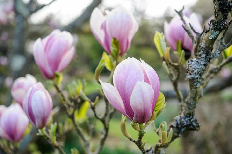20 Trees For Small Gardens In Pictures Bbc Gardeners World Magazine