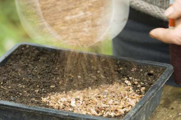 covering-compost-with-sharp-grit-3