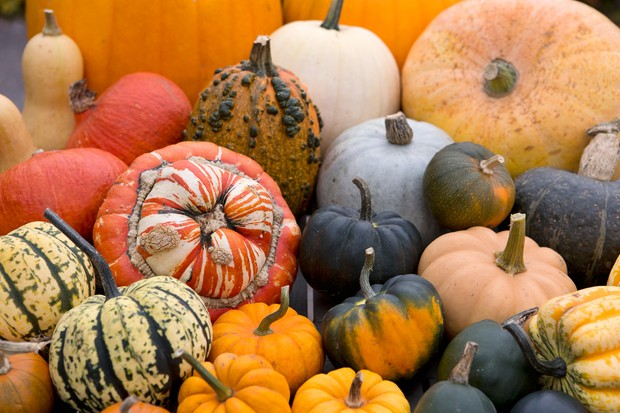 29158A colourful selection of pumpkins and squash