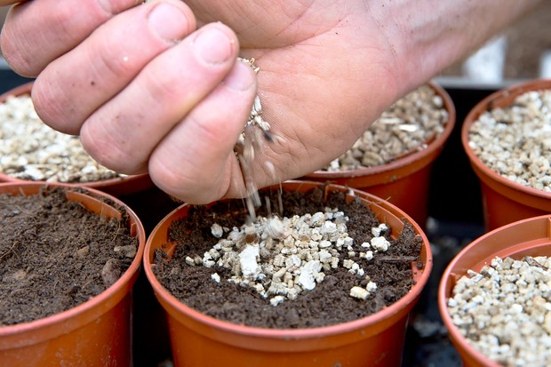 covering-seeds-with-vermiculite-2