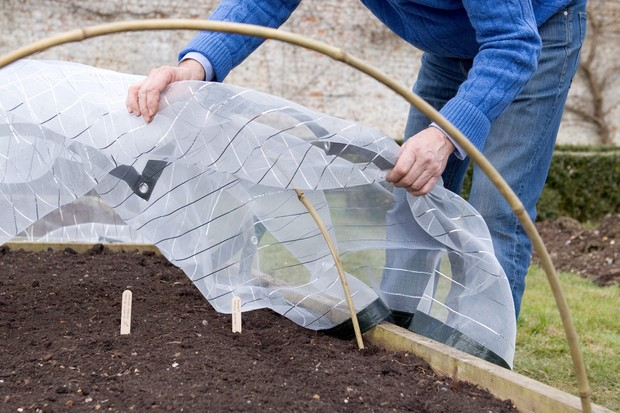Putting insect-proof mesh over bamboo hoops to protect emerging seedlings