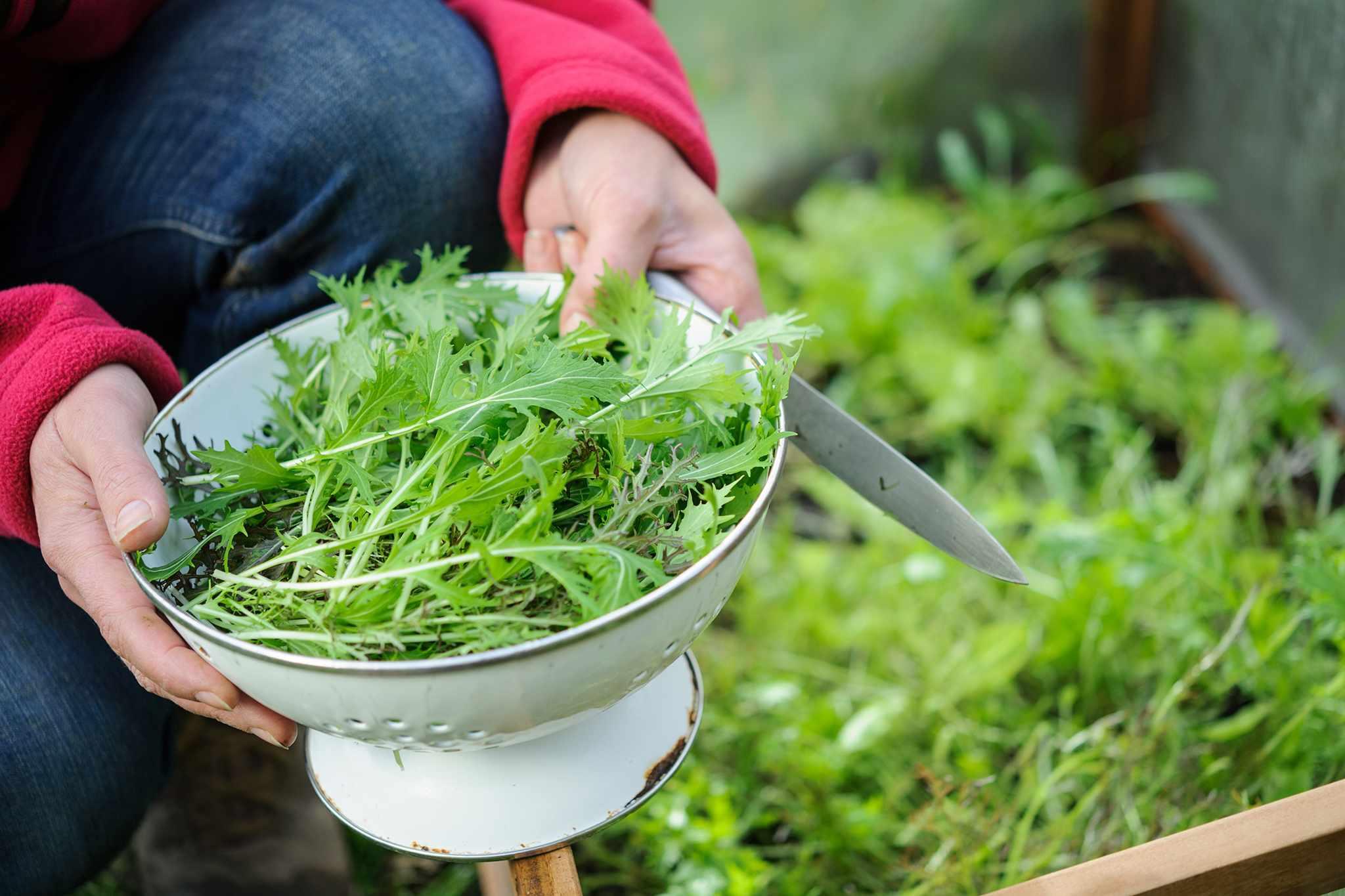 Harvested winter salad