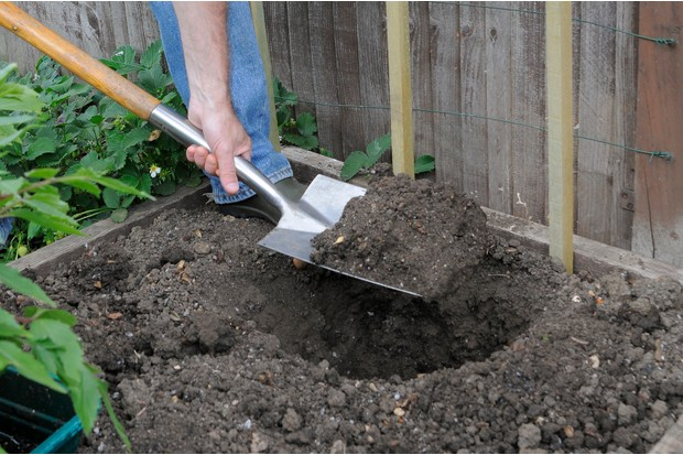 dig-a-planting-hole-4