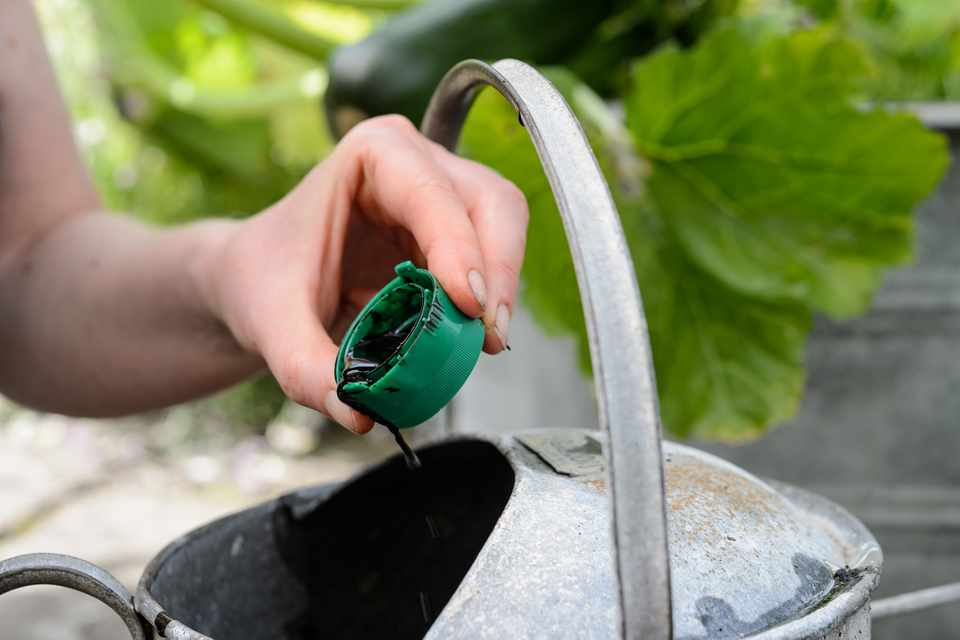 Tips for Feeding Plants in Pots