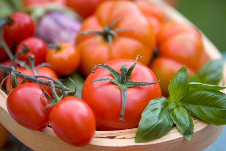 A selection of homegrown tomatoes in a wooden trug