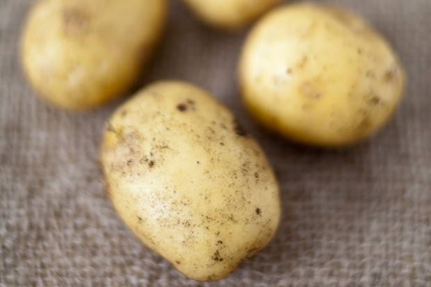 White-skinned 'Charlotte' potatoes