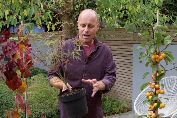 joe-swift-choosing-trees-for-small-gardens-2