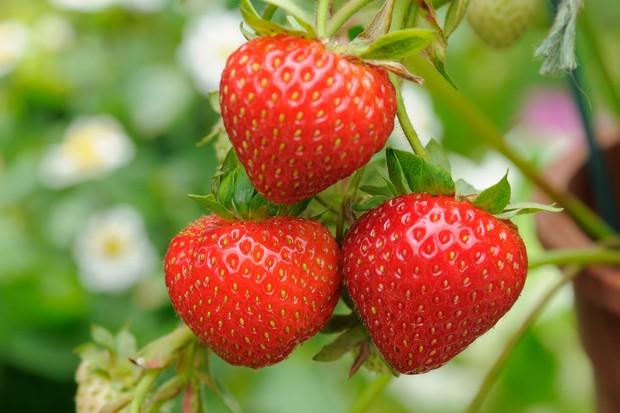 strawberries-high-in-vitamin-c-2