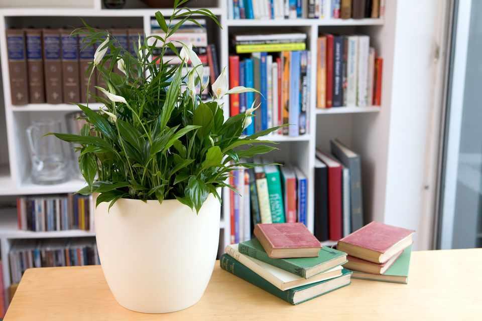 Plant an indoor foliage display