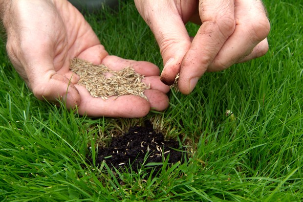 Sowing grass seed