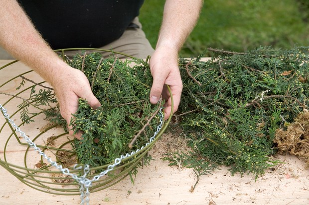 Lining the hanging basket with conifer branches