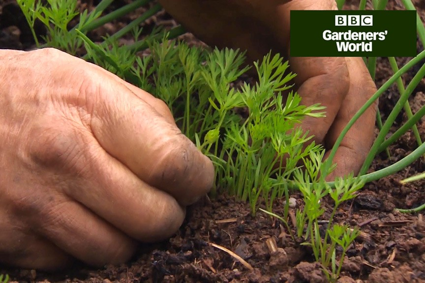 How to thin out carrot seedlings video