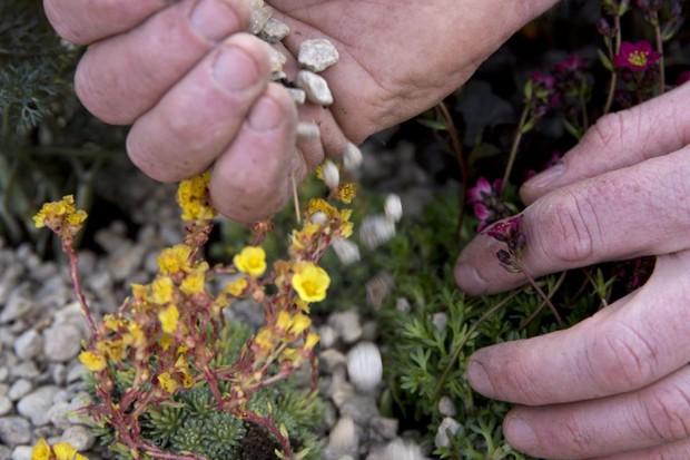 Adding gravel around the plants