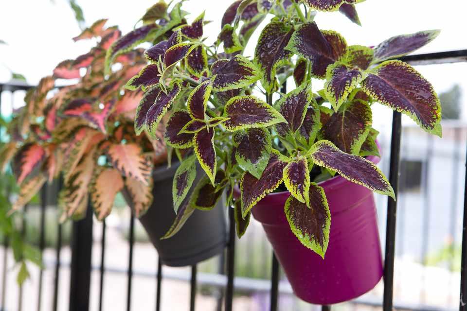 Best Plants For Balconies Bbc Gardeners World Magazine