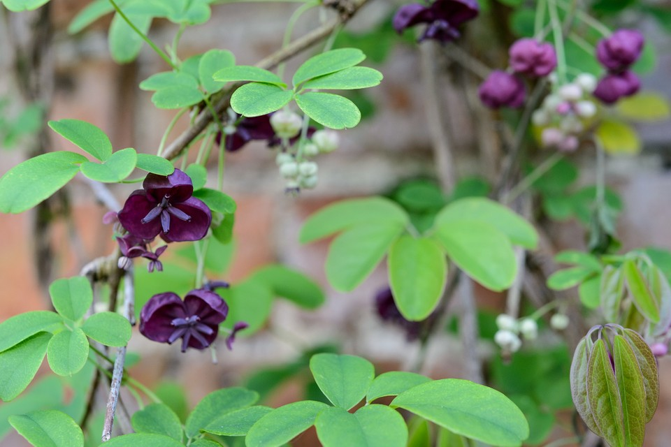 Five Plants For A North Facing Wall Bbc Gardeners World Magazine