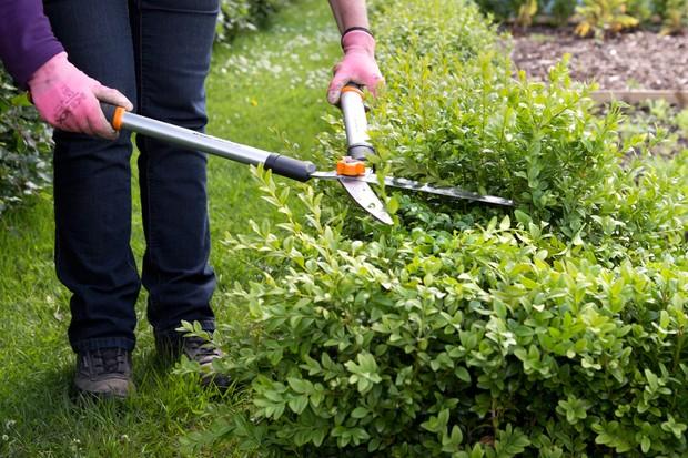 pruning-box-4