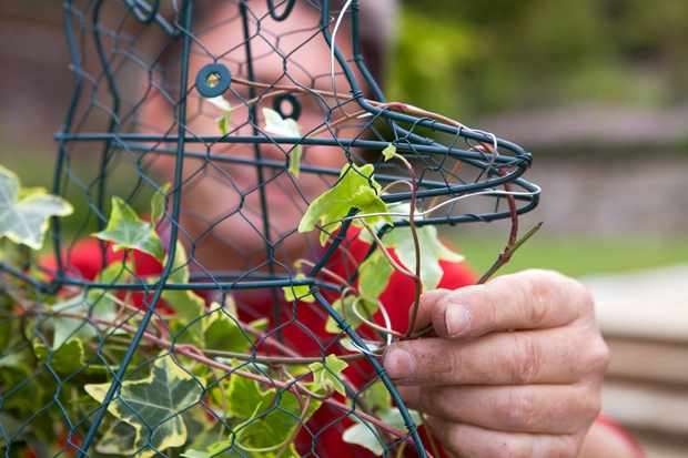 tying-the-ivy-into-the-frame-3