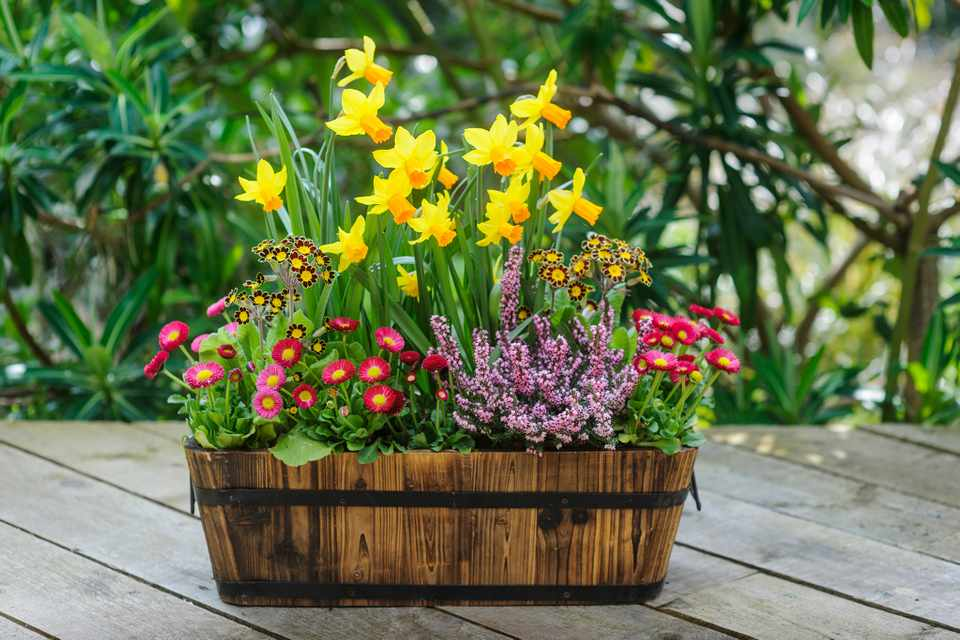 Daffodil and daisy container
