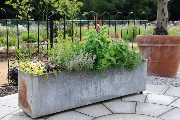 A herb garden in an old metal farm trough