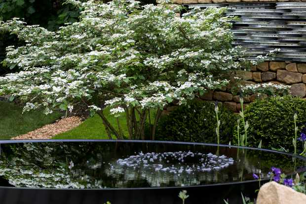 pond-at-the-rhs-chelsea-flower-show-2