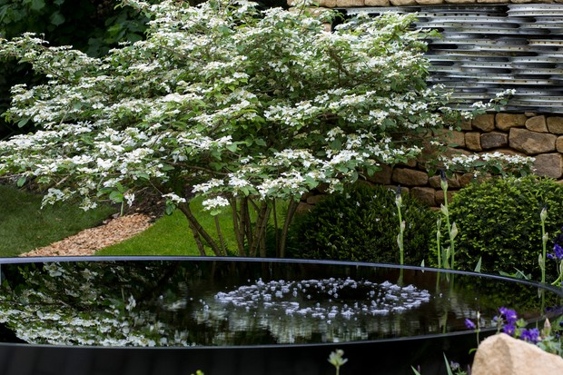 A watergarden at the RHS Chelsea Flower Show