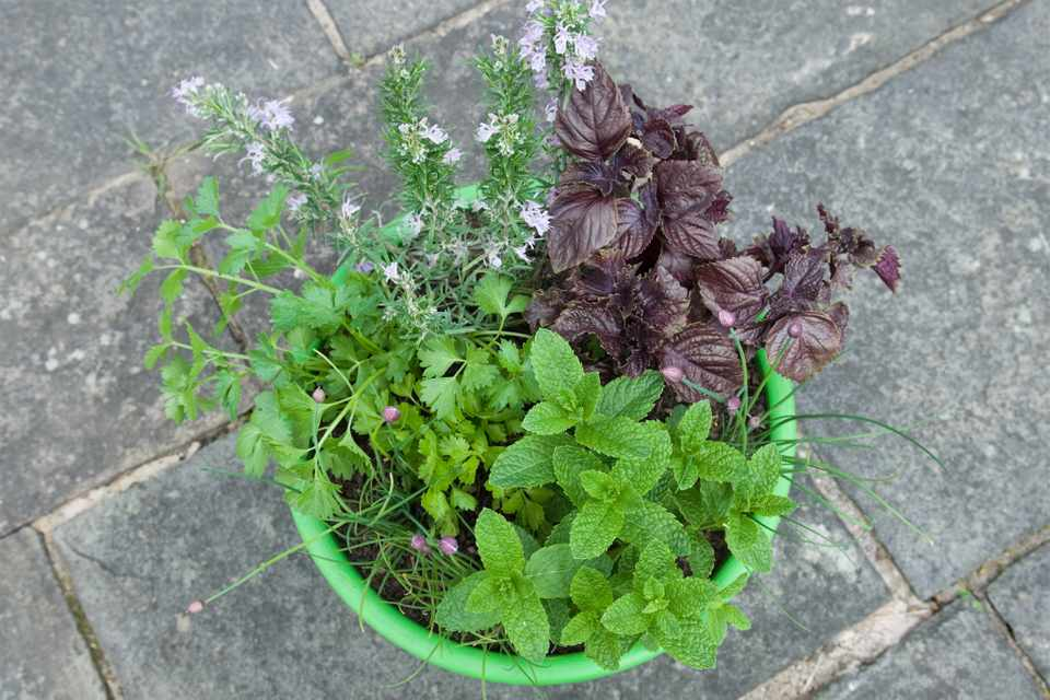 Herb pot for vegetable dishes