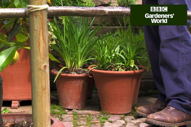 How to holiday-proof your patio pots