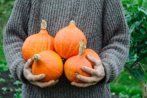 Armfuls of bright orange squash