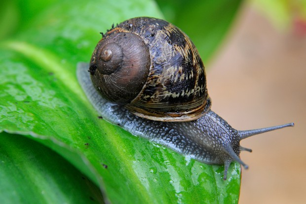 snail-on-leaf-3