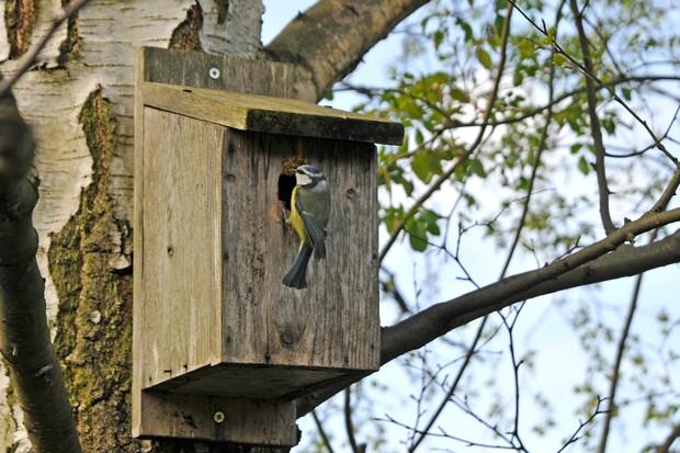 A tit on a nest box