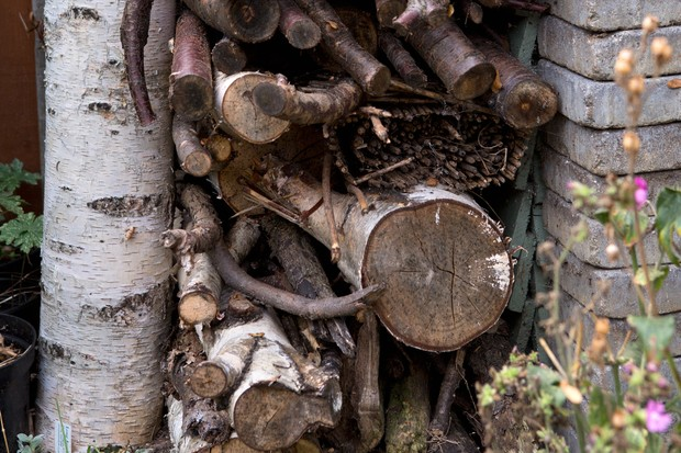 A stack of logs and twigs