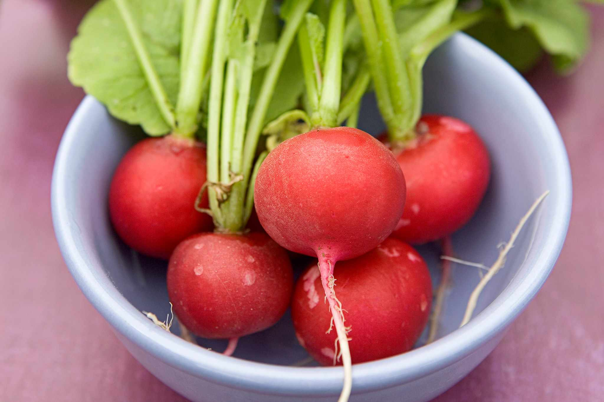 Radishes – Grow Guide