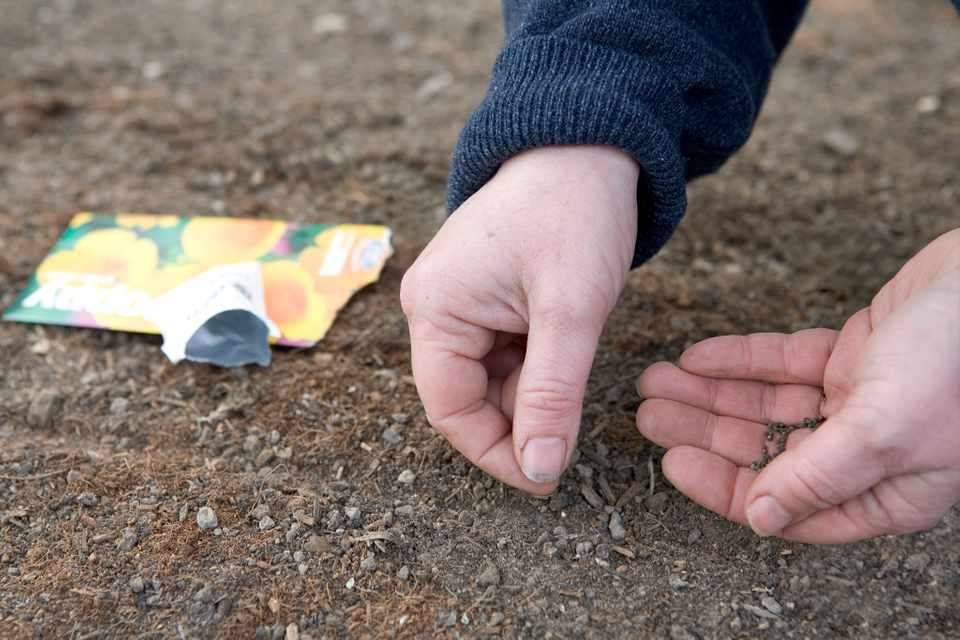 How To Prepare Soil for Sowing