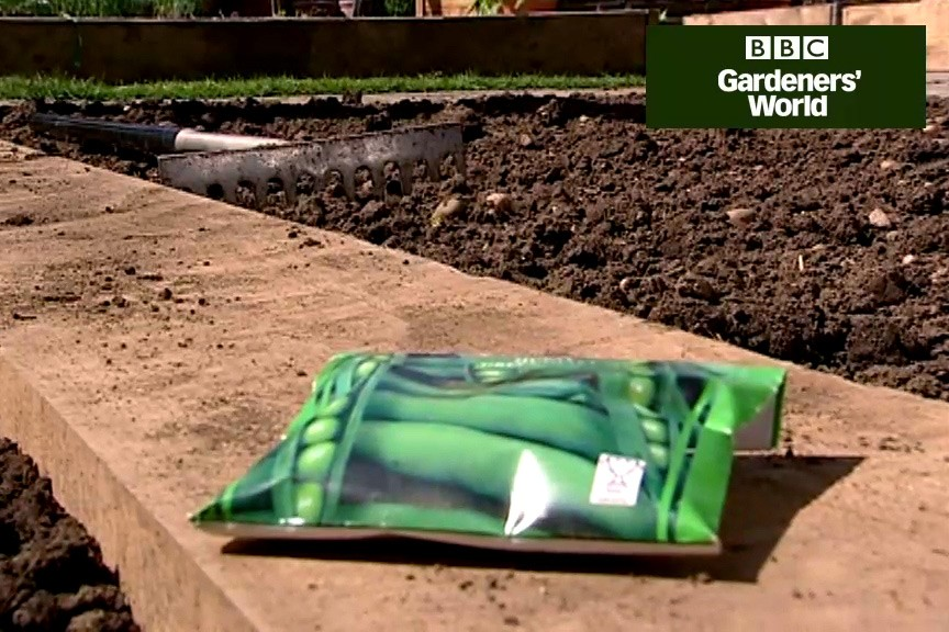 How to grow peas from seed video