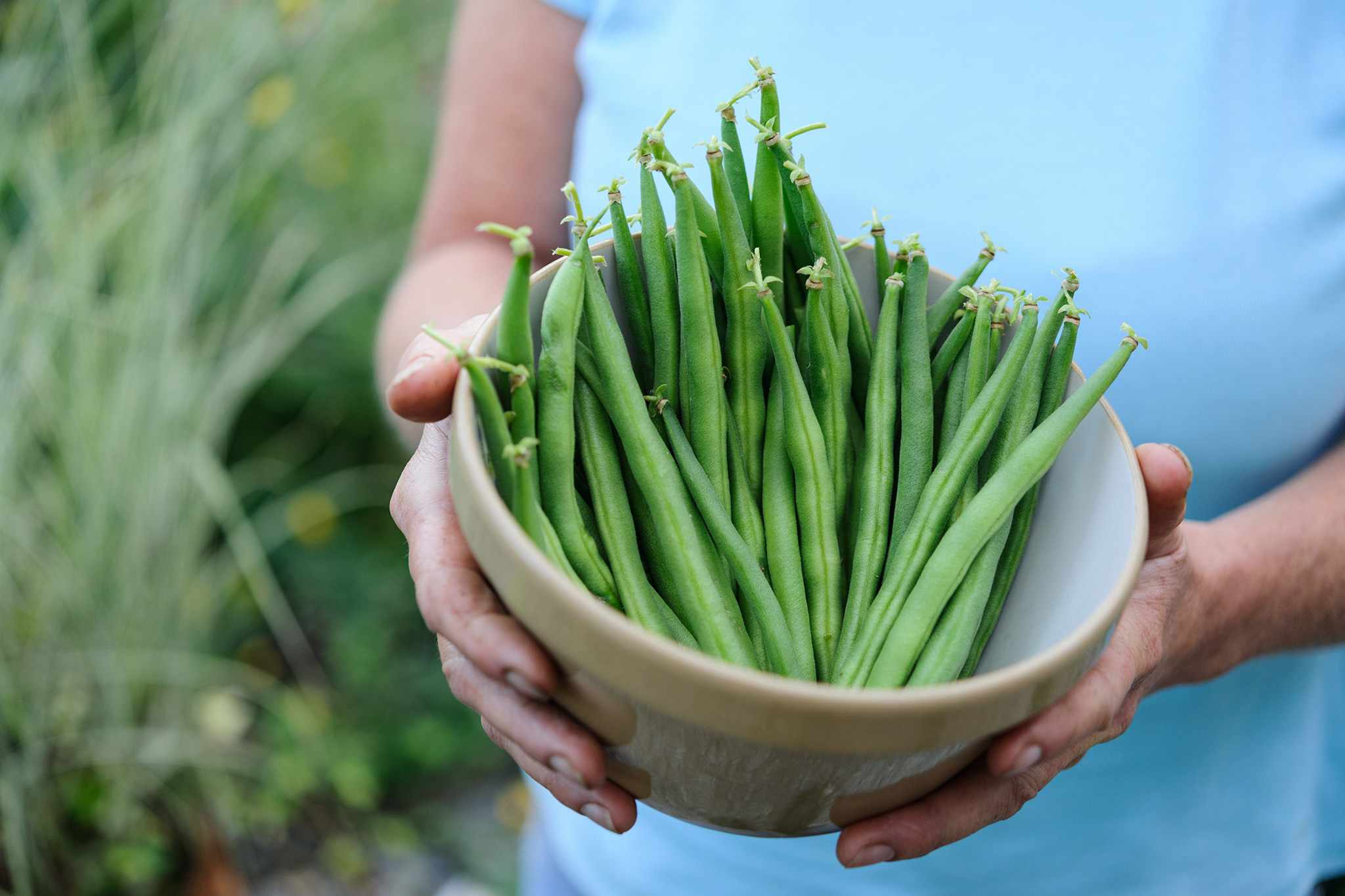 A bowlful of freshly picked French beans