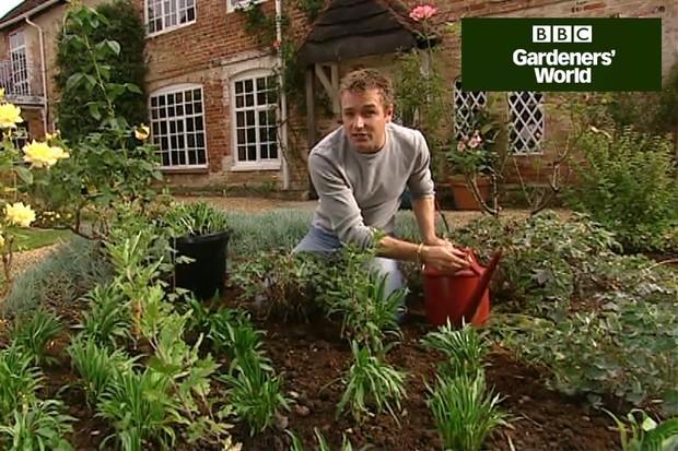 How to grow wallflowers