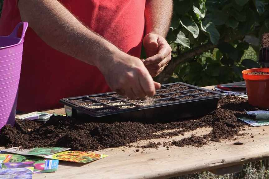 Sowing small seeds video