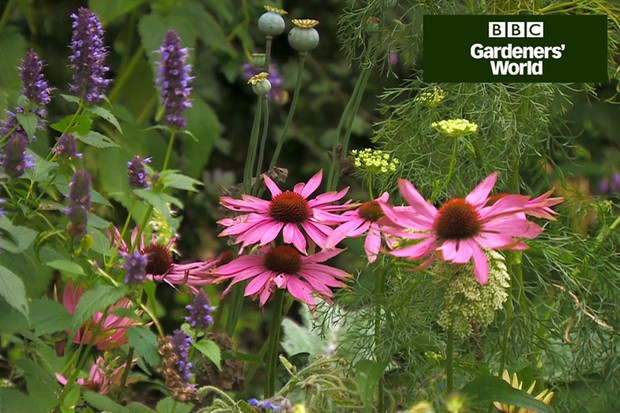 How to create a wildlife garden (part eight)