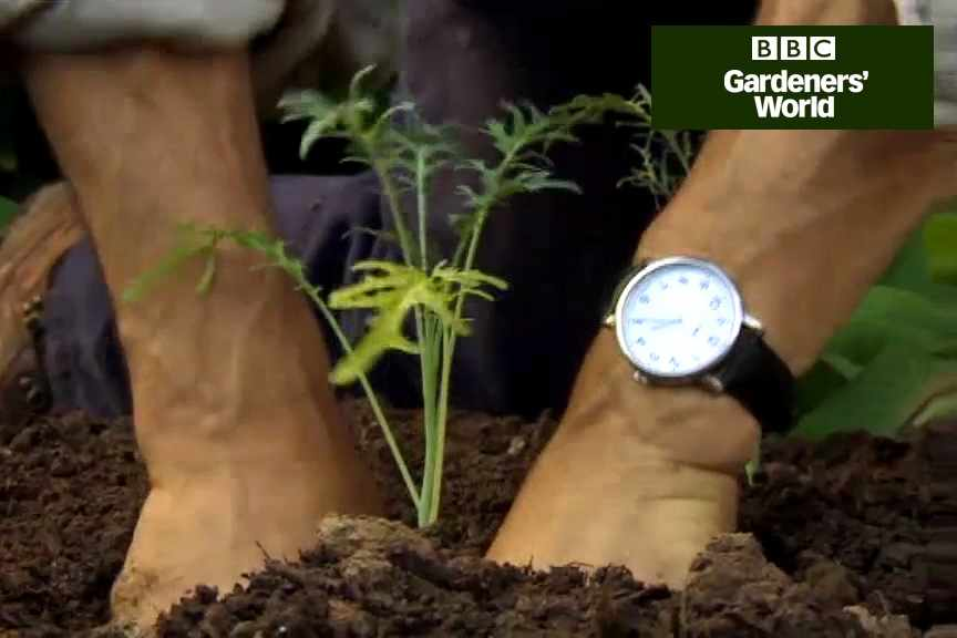 How to plant kale video