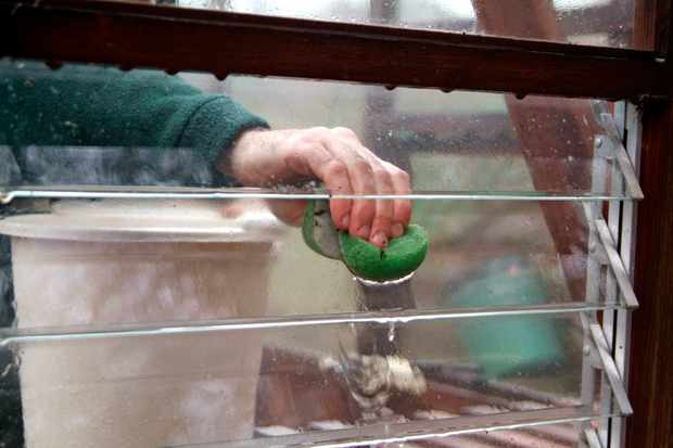 How to tidy and clean your greenhouse