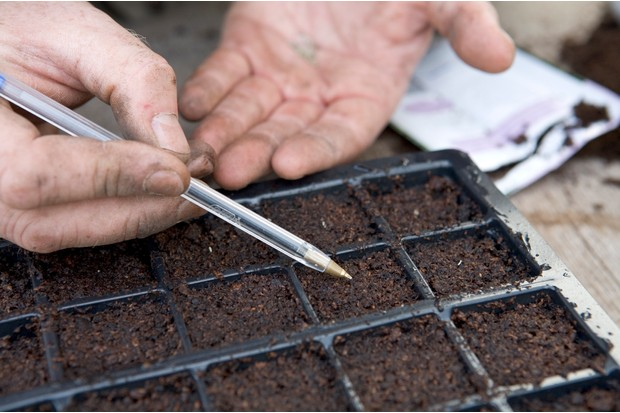 Create a wildflower meadow - sowing the seeds with a biro