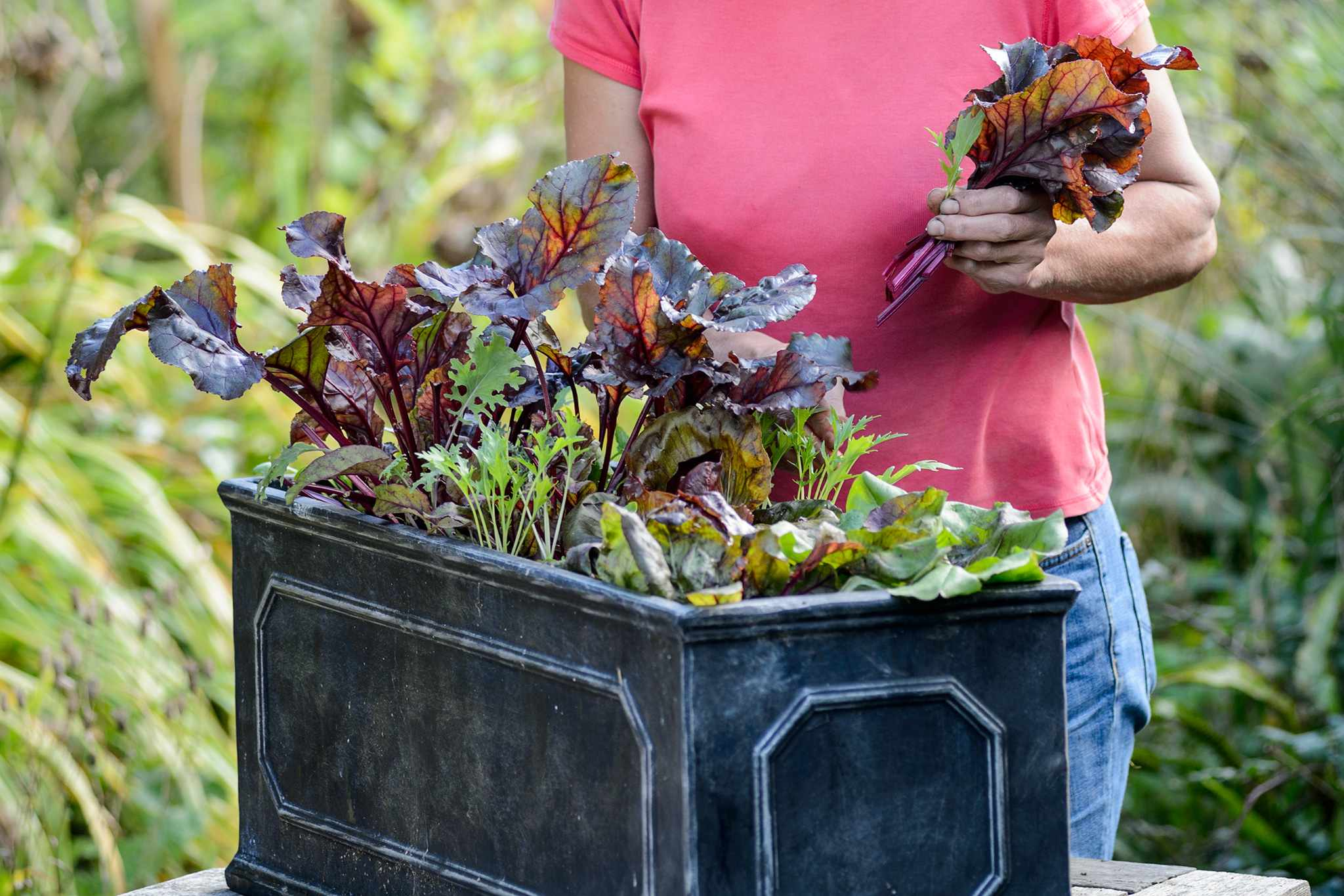 Quick growing salad container