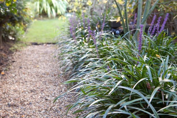 20 plants for dry shade gardenersworld liriope muscari is a tough perennial that copes even in the darkest and driest of conditions its purple blooms are a valuable asset in autumn rising above mightylinksfo