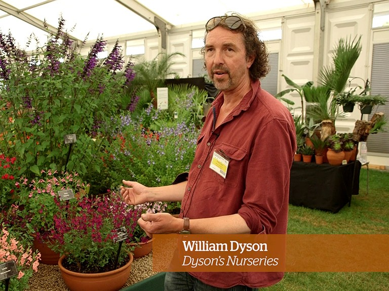 Caring for salvias - Golden Rules
