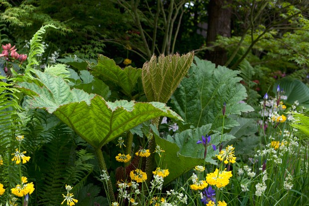 10-plants-to-grow-in-a-bog-garden