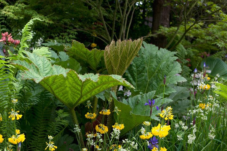 10 Plants To Grow In A Bog Garden Bbc Gardeners World Magazine