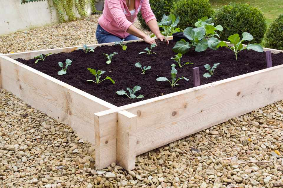 How to build a raised vegetable bed