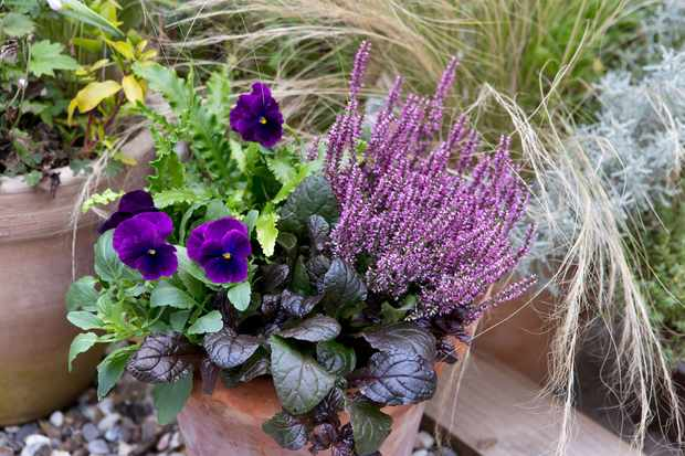Purple pot display