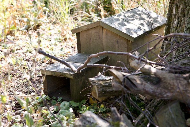 hedgehog-house-3