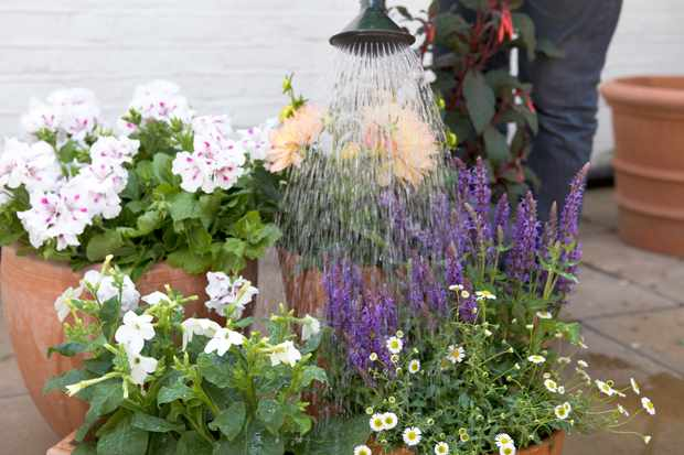 watering-potted-plants-6